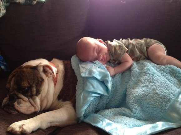 Travis and his big sister, bulldog Elli, cuddling up sharing Little Giraffe Blanket for a cozy nap!